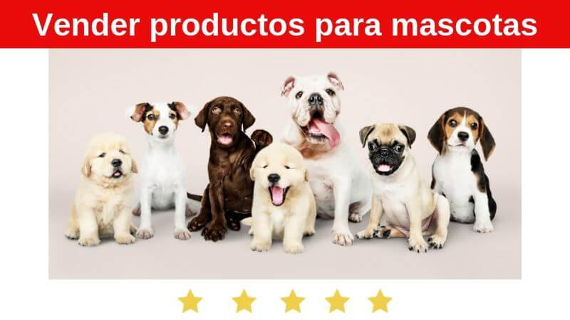 hacer negocios rentables con mascotas